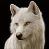 0ShadoWo1f0's avatar
