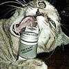 12345678910kitty's avatar