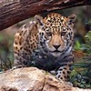 15Leopardi's avatar