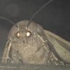 19hydrangeas's avatar