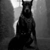 1Humanity's avatar