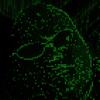 298enterprise's avatar