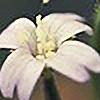 48photography's avatar