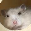 A4rdvark's avatar