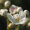 A-Myriad-Butterflies's avatar