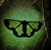 Aakash916's avatar