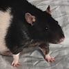 abluecorridor's avatar