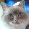 ABluSkittle's avatar
