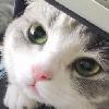 acatwithnopurpose's avatar