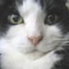Acue's avatar