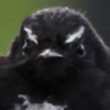 adelruna's avatar