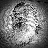 adli's avatar