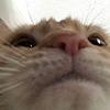 advancedgaben's avatar