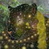 AegisDigitalImaging's avatar