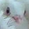 aemomo's avatar