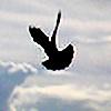 Aeternis's avatar