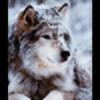 afkitsune's avatar