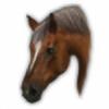 AfraidMe's avatar