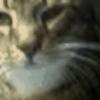 Agaciorr's avatar