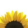 AGBeh's avatar