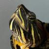 agumon90210's avatar