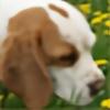 agusia955's avatar