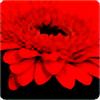 Agusik's avatar
