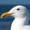 Aidan-Gull's avatar