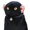AjajpLorens's avatar