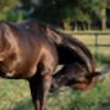 aka-horse-stock's avatar