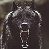 AkaneW0lf's avatar