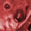 Akeidamos's avatar