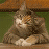 akrawczyk83's avatar