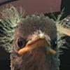 Alexander-Brandt's avatar