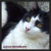 AliBrown1313's avatar
