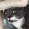 Alicesta's avatar