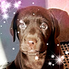 AlitaHelms's avatar