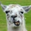 ALlamaHerder's avatar