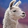 alpacalot's avatar