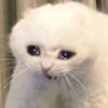 Alyshh's avatar