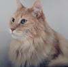 Amaded2006's avatar