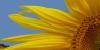 AmazingPictures's avatar