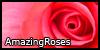 AmazingRoses's avatar