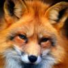AmberFoxo's avatar