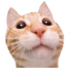 americancurlcats's avatar