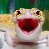 AmericanGecko's avatar