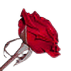 amethyst--rose's avatar