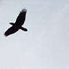 Amethyst-Hawk's avatar