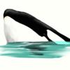 AmethystFH's avatar