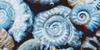 Ammonites's avatar
